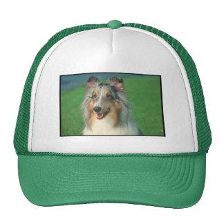 Blue Merle Collie Hats