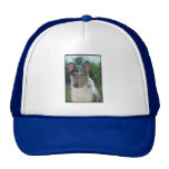 Blue Merle Collie Smooth Coat Mesh Hats