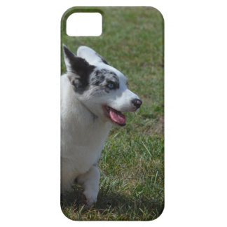 Blue Merle Corgi Dog iPhone SE/5/5s Case