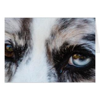 Blue Merle Dog Cards