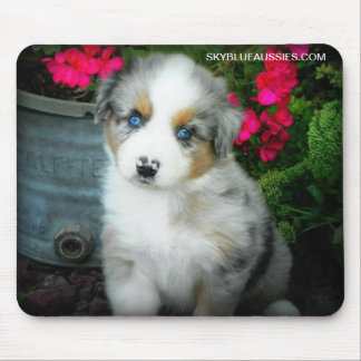 Blue Merle Puppy Mouse Pad
