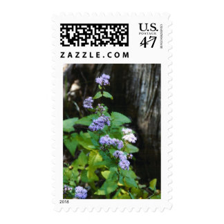 Blue Mist Stamp