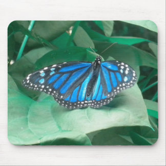 Blue Monarch Butterfly mouse pad