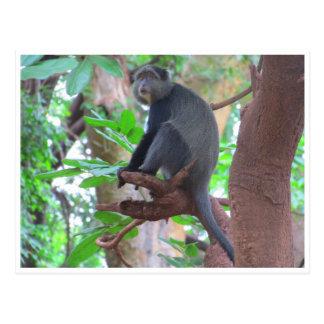 blue monkey postcard