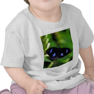 Blue Moon Butterfly Great Eggfly in Thailand Tee Shirts