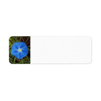 Blue Morning Glory Flower Label