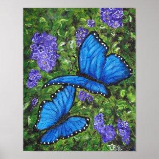 Blue morph Butterflies - Artist Print