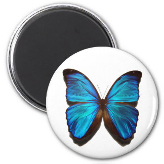 Blue Morpho Butterfly 2 Inch Round Magnet