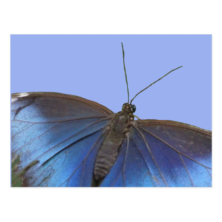 Blue Morpho Butterfly DIY Postcard