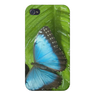 Blue Morpho Butterfly iPhone 4 Case