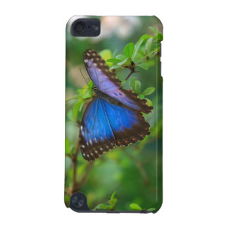 Blue Morpho Butterfly iPod Touch iPod Touch 5G Cases