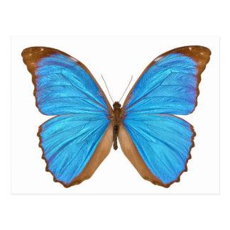 Blue Morpho Butterfly (Menelaus Blue Morpho, Morph Postcard