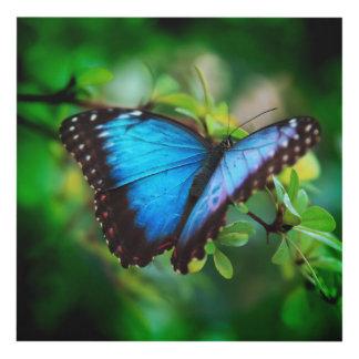 Blue Morpho Butterfly Panel Wall Art