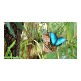 Blue Morpho Butterfly Photo Card