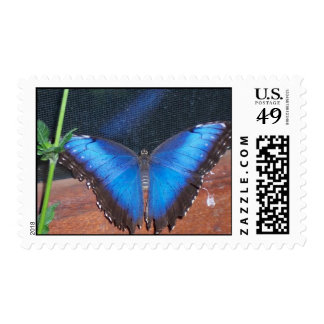 Blue Morpho Butterfly - Postage