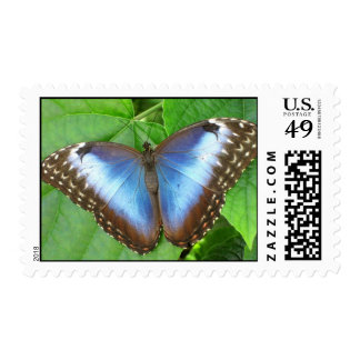 Blue Morpho Butterfly Postage