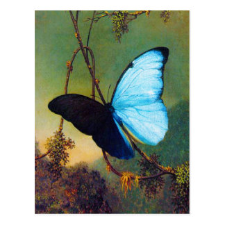 Blue Morpho Butterfly Postcard