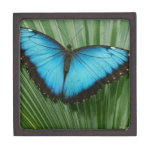 Blue Morpho Butterfly Premium Keepsake Box