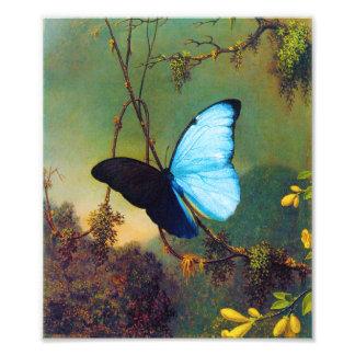 Blue Morpho Butterfly Print Art Photo