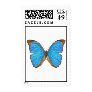 Blue Morpho Butterfly Stamps