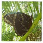 Blue Morpho Butterfly Tile