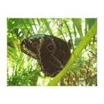 Blue Morpho Butterfly Tropical Nature Photography Canvas Print