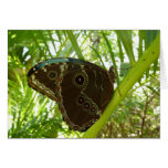Blue Morpho Butterfly Tropical Nature Photography Card