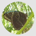 Blue Morpho Butterfly Tropical Nature Photography Classic Round Sticker