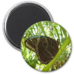 Blue Morpho Butterfly Tropical Nature Photography 2 Inch Round Magnet