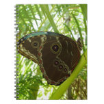Blue Morpho Butterfly Tropical Nature Photography Notebook