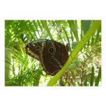 Blue Morpho Butterfly Tropical Nature Photography Photo Print