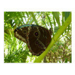 Blue Morpho Butterfly Tropical Nature Photography Postcard
