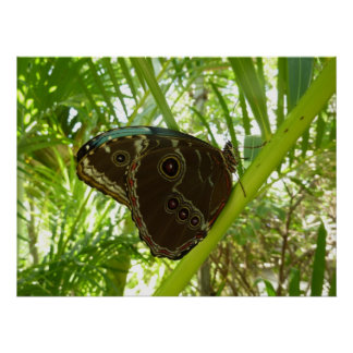 Blue Morpho Butterfly Tropical Nature Photography Poster