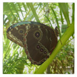 Blue Morpho Butterfly Tropical Nature Photography Tile