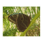 Blue Morpho Butterfly Tropical Nature Photography Wood Wall Decor