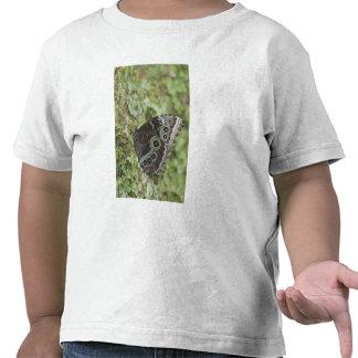 Blue Morpho, Morpho menelaus, adult newly 2 T-shirt