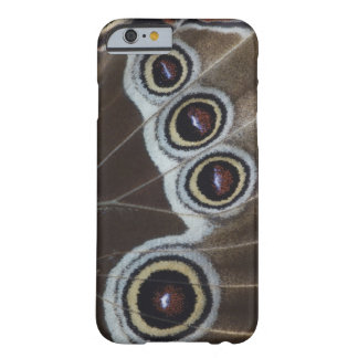 Blue Morpho, Morpho menelaus, adult newly Barely There iPhone 6 Case