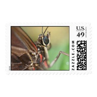 Blue Morpho (Morpho peleides) Stamps