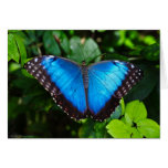 Blue Morpho Note Cards