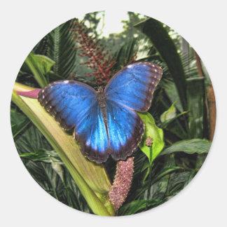 Blue Morpho Peleides Classic Round Sticker