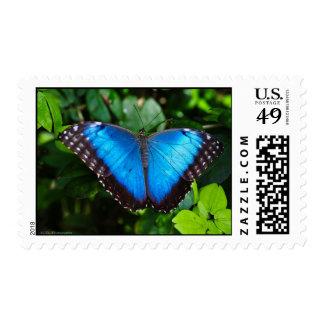 Blue Morpho Stamps
