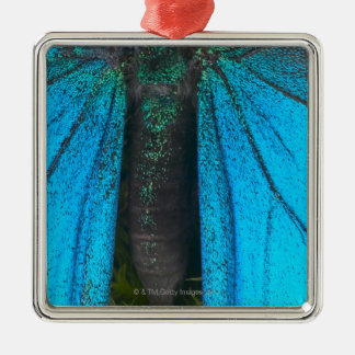 Blue mountain swallowtail (Papilio ulysses) Metal Ornament