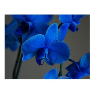 Blue Mystique Postcards