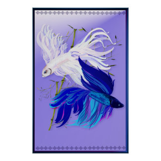 Blue 'n' White Siamese Fighting Fish Large Poster