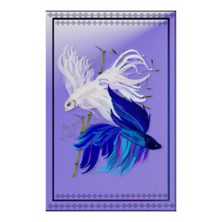 Blue 'n' White Siamese Fighting Fish small Poster