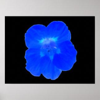 Blue Nasturtium Print