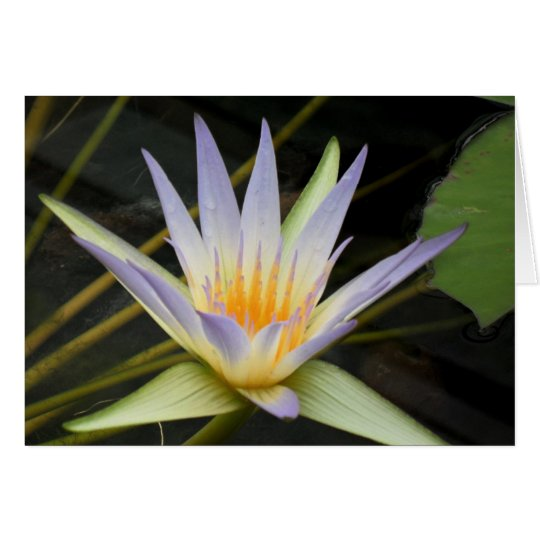 Blue Nile Water Lily Card