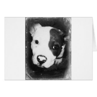 Blue Nose Pitbull Puppy Card