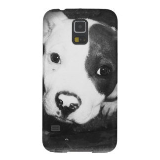 Blue Nose Pitbull Puppy Cases For Galaxy S5