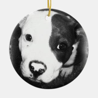 Blue Nose Pitbull Puppy Ceramic Ornament